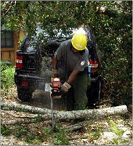 Photo of chain saw operation