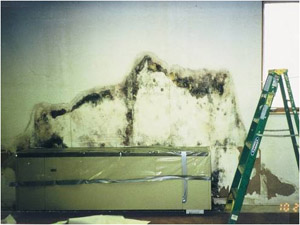 Photo of mold damage in building