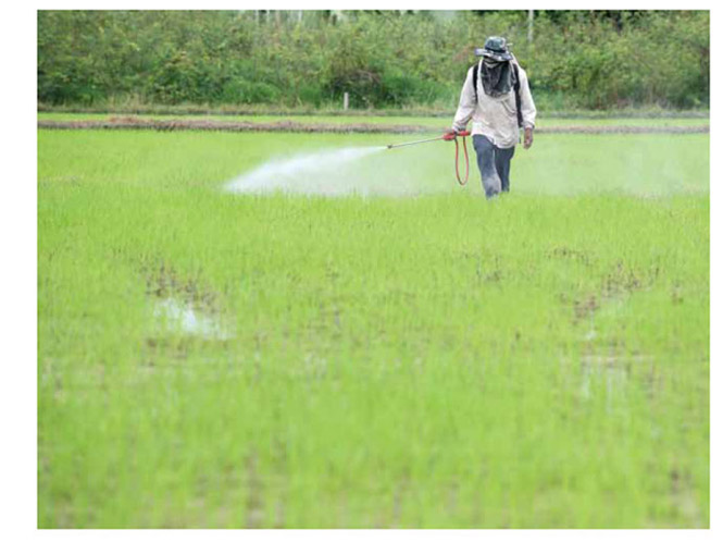 Image of worker spraying pesticdes in a marsh