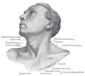 side view graphic of human head