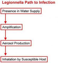 eLCOSH : Understanding Legionnaires' Disease: A Fact Sheet