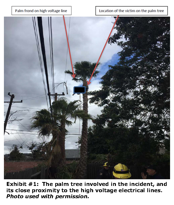 Photo of he palm tree involved in the incident, and its close proximity to the high voltage electrical lines