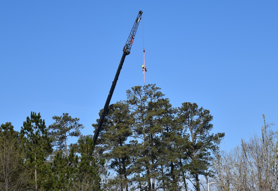 Arborist being raised by crane to trim trees